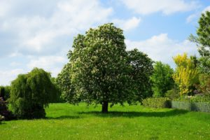 樹木葬とは・メリットとデメリット